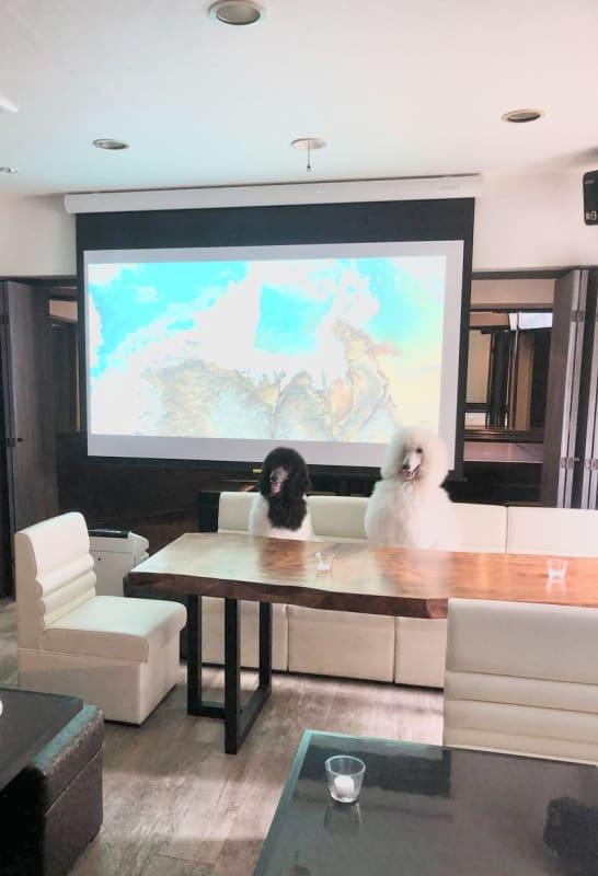 ペットと一緒に映画鑑賞やスポーツ観戦も可能! - 宴会場 芋場六本木 3階の室内の写真
