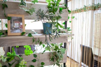 ●2階ナチュラルカフェパーテーション - 東京・王子「アイビーカフェ王子」 2階ナチュラルカフェ/約5畳の室内の写真