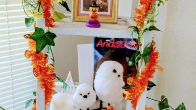 フクロウの親子が可愛らしい。(ハロウィンバージョン)  - 高田馬場スペース アンダルシア会議室の室内の写真
