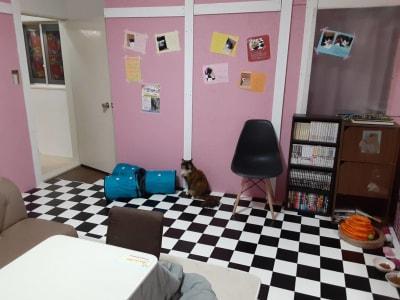 B部屋逆側 - ねことお休みどころ しらたまの室内の写真