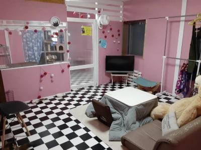B部屋  12月~3月末はこたつがご用意してあります。猫なし対応OK - ねことお休みどころ しらたまの室内の写真