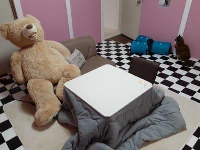 B部屋 こたつ周辺 - ねことお休みどころ しらたまの室内の写真