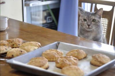猫がいる家なので、アレルギーの方は注意してください。 人見知りなので、一緒に撮影はできません。 - ねこパンLab 猫がいる古いマンションのお茶の間の設備の写真