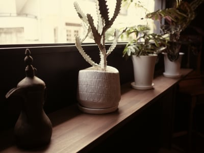 FIX窓が2箇所。窓辺の観葉植物は定期的に変わります - Litereer リテリア 撮影スペース ワークスペースの室内の写真