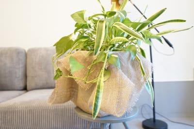観葉植物 - キブンシツ蔵前 レンタルスタジオ蔵前の室内の写真