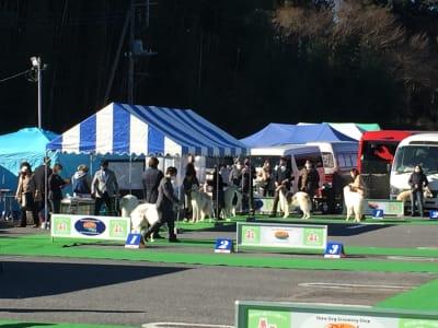 先日はドッグショーが開催されました! - サン・ポート F区画(約3,300㎡)の室内の写真