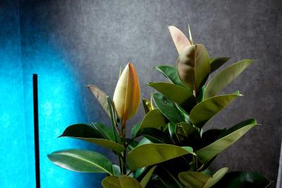 ゴムの木とLEDライトで自由に雰囲気を演出。 - 動画スタジオ 五反田ONAIR 動画撮影・配信スタジオの室内の写真