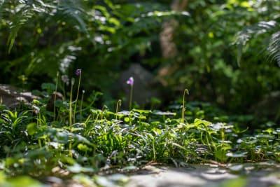 庭 - 日暮荘 町家の個室で- 撮影プランの室内の写真