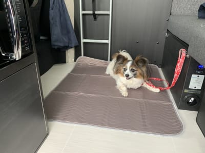 ペット専用車なので、ペットの同伴もOK! - キャンタル博多店 ペットと一緒にテレワーク!の室内の写真