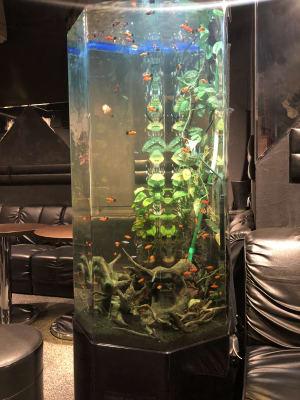 お部屋の奥ではかわいいお魚さんがお待ちしております! - club Sweet パーティルームの室内の写真