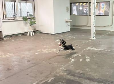 ERCビル(元SKビル) 室内運動場【ドッグラン】の室内の写真