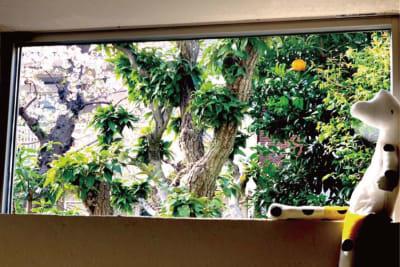 自然光と緑溢れるスペースになっています! - halenoki (ハレノキ) ハレノキの室内の写真
