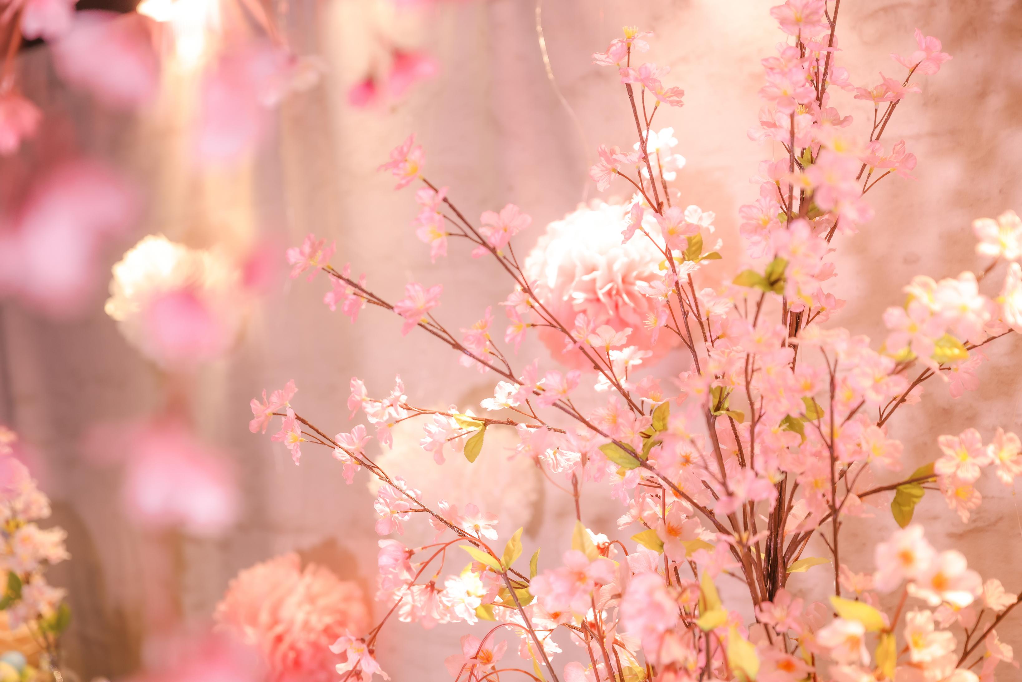 桜満開でお待ちしております♪ - 大手町スペースブリッド コワーキング撮影スタジオ の室内の写真