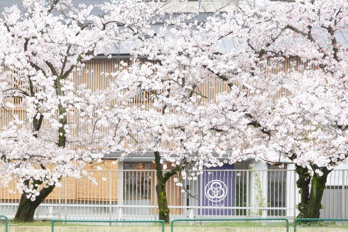 共用スペースから見える桜が、今ちょうど咲き始めているところです!2021/3/20 - みつわ屋 共用スペースの室内の写真